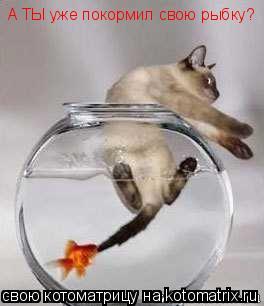 Котоматрица: А ТЫ уже покормил свою рыбку?