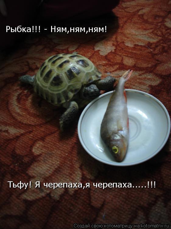Котоматрица: Рыбка!!! - Ням,ням,ням! Тьфу! Я черепаха,я черепаха.....!!!