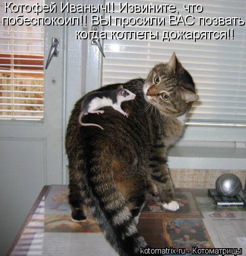 Котоматрица: Котофей Иваныч!! Извините, что  побеспокоил!! ВЫ просили ВАС позвать,  когда котлеты дожарятся!!