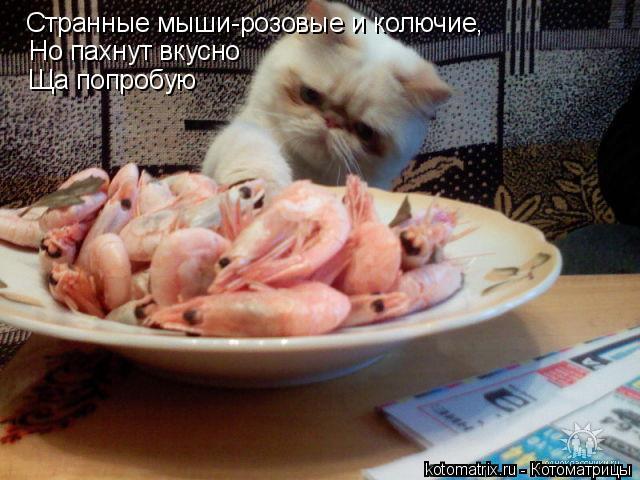 Котоматрица: Странные мыши-розовые и колючие, Но пахнут вкусно Ща попробую