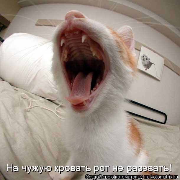 Котоматрица: На чужую кровать рот не разевать!
