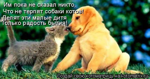 Котоматрица: Им пока не сказал никто,  Что не терпят собаки котов! Делят эти малые дитя Только радость бытия!