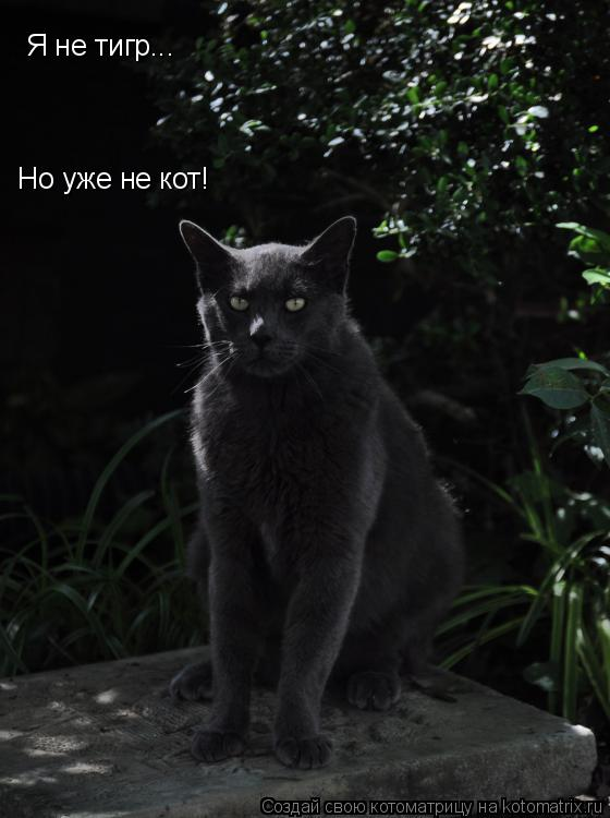 Котоматрица: Я не тигр...  Но уже не кот!