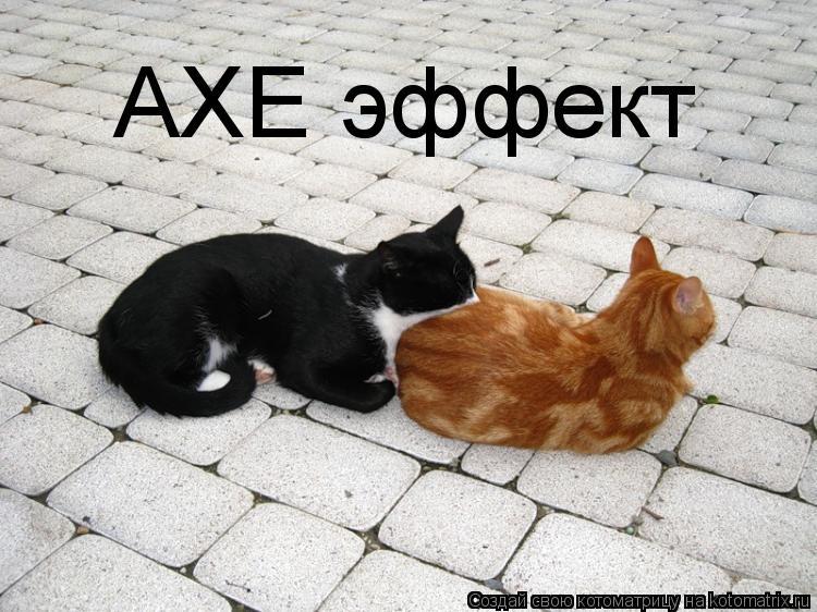 Котоматрица: AXE эффект