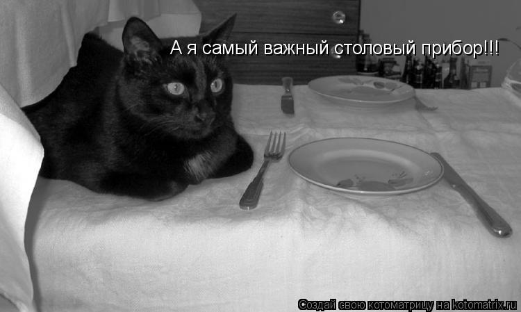 Котоматрица: А я самый важный столовый прибор!!!