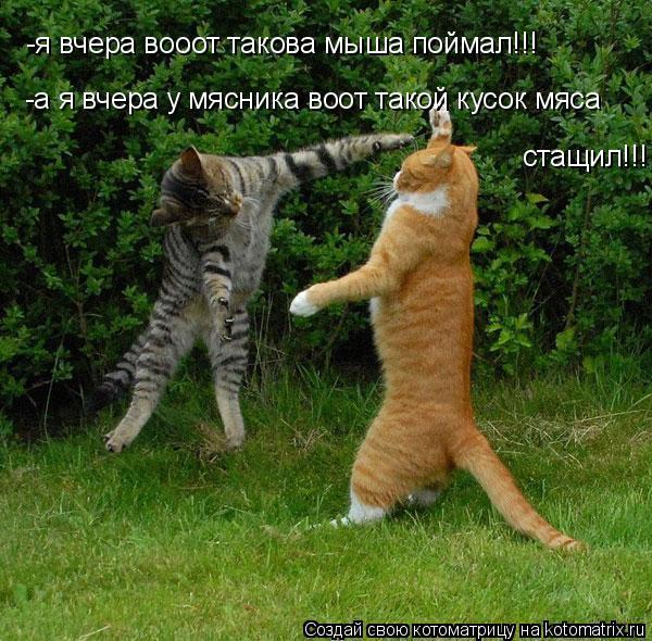 Котоматрица: -я вчера вооот такова мыша поймал!!! -а я вчера у мясника воот такой кусок мяса  стащил!!!