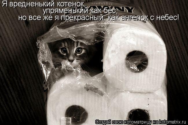 Котоматрица: Я вредненький котенок, упряменький как бес, но все же я прекрасный, как ангелок с небес!