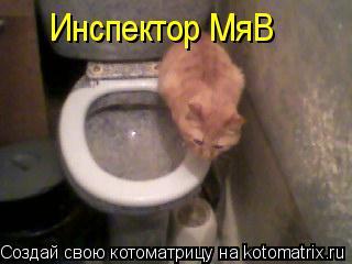 Котоматрица: Инспектор МяВ