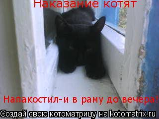 Котоматрица: Наказание котят Напакостил-и в раму до вечера!