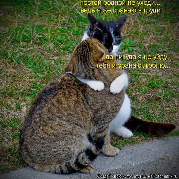 Котоматрица: ...постой родной не уходи... ...ведь я же сранаю в груди... ...да никуда я не уйду... ...тебя и сранаю люблю....