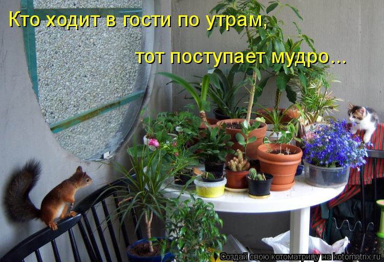Котоматрица: Кто ходит в гости по утрам,  тот поступает мудро...
