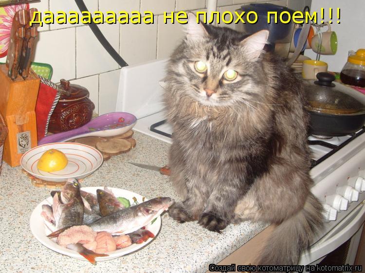Котоматрица: дааааааааа не плохо поем!!!