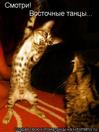 Котоматрица: Смотри! Восточные танцы...