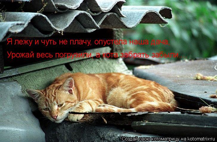 Котоматрица: Я лежу и чуть не плачу, опустела наша дача, Урожай весь погрузили, а кота забрать забыли....