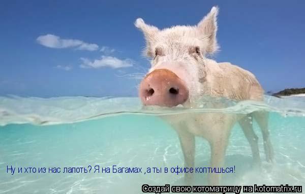 Котоматрица: Ну и хто из нас лапоть? Я на Багамах ,а ты в офисе коптишься!