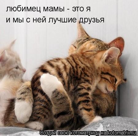 Котоматрица: любимец мамы - это я и мы с ней лучшие друзья