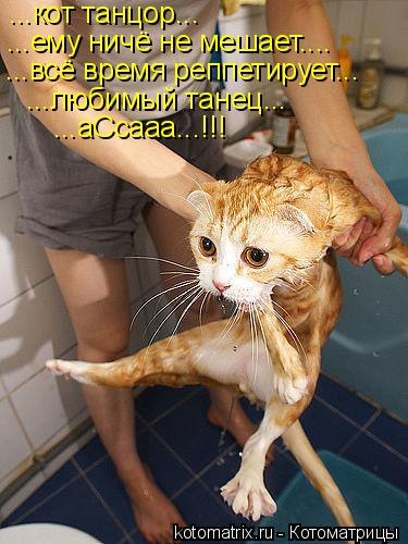 Котоматрица: ...кот танцор... ...ему ничё не мешает.... ...всё время реппетирует... ...любимый танец... ...аСсааа...!!!