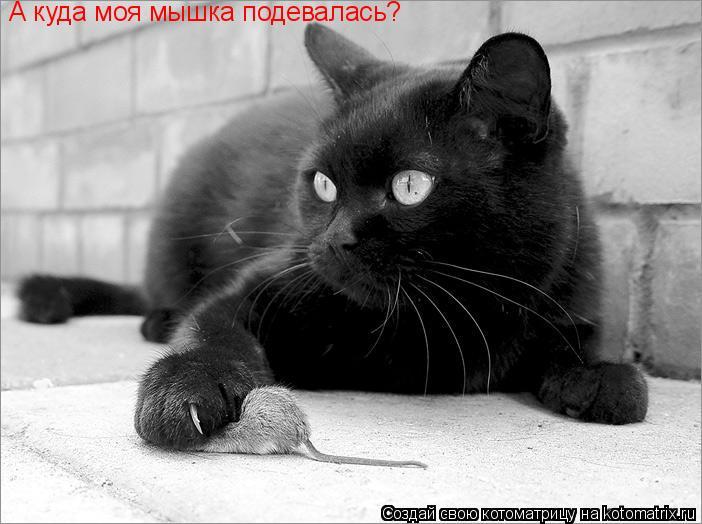 Котоматрица: А куда моя мышка подевалась?
