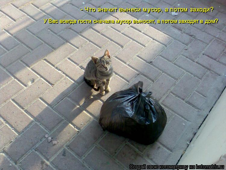 Котоматрица: У Вас всегда гости сначала мусор выносят, а потом заходят в дом? - Что значит вынеси мусор, а потом заходи?