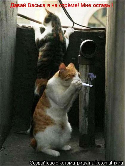 Котоматрица: Давай Васька я на стрёме! Мне оставь !