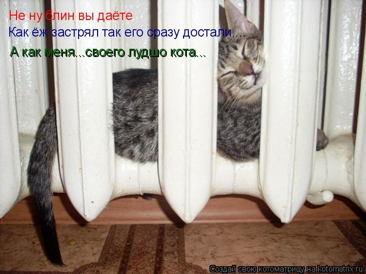 Котоматрица: Не ну блин вы даёте Как ёж застрял так его сразу достали.... А как меня...своего лудшо кота...