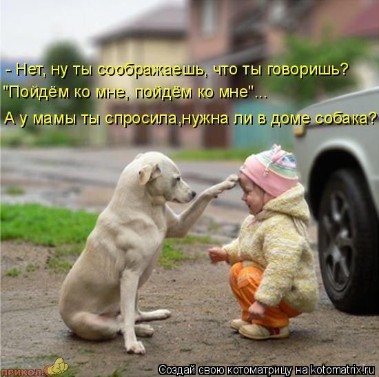 """Котоматрица: """"Пойдём ко мне, пойдём ко мне""""... А у мамы ты спросила,нужна ли в доме собака? - Нет, ну ты соображаешь, что ты говоришь?"""