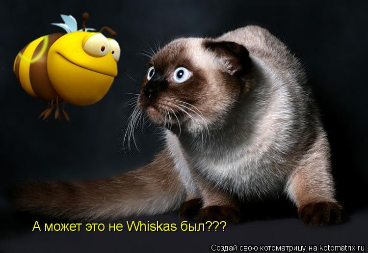 Котоматрица: А может это не Whiskas был???