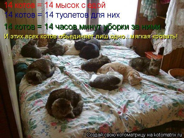 Котоматрица: 14 котов = 14 мысок с едой 14 котов = 14 часов минут уборки за ними  14 котов = 14 туолетов для них  И этих всех котов обьединяет лиш одно...мягкая кр