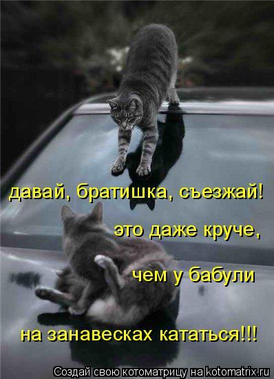 Котоматрица: давай, братишка, съезжай! это даже круче,  чем у бабули на занавесках кататься!!!