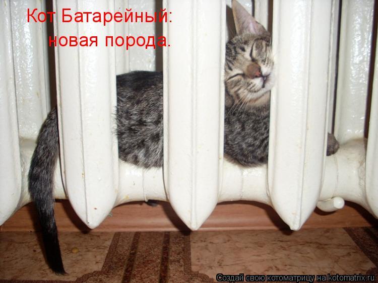 Котоматрица: Кот Батарейный: новая порода.