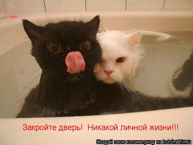 Котоматрица: Закройте дверь!  Никакой личной жизни!!!