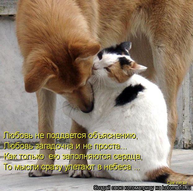Котоматрица: Любовь не поддается объяснению,  Любовь загадочна и не проста... Как только  ею заполняются сердца,  То мысли сразу улетают в небеса ...  Сам пи