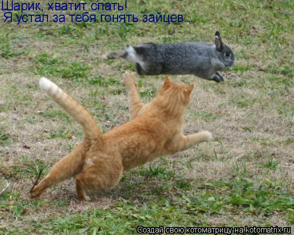 Котоматрица: Шарик, хватит спать! Я устал за тебя гонять зайцев..