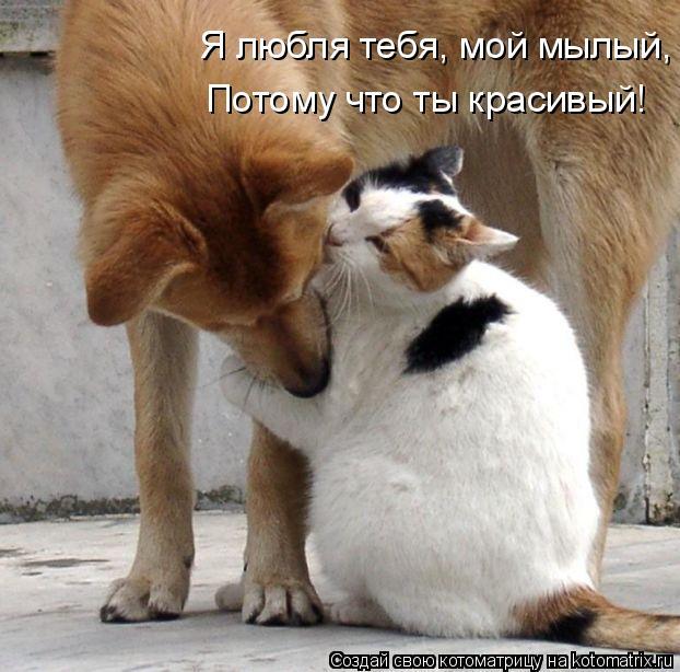 Котоматрица: Я любля тебя, мой мылый, Потому что ты красивый!
