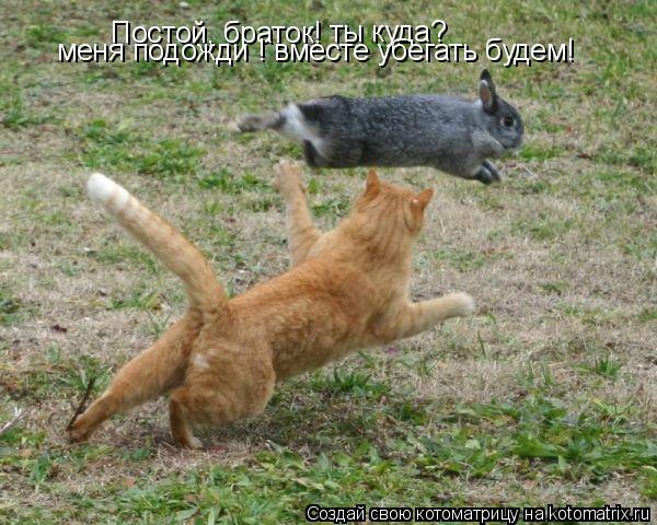 Котоматрица: Постой, браток! ты куда? меня подожди ! вместе убегать будем!