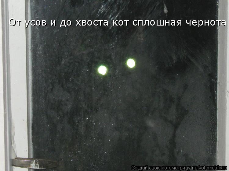 Котоматрица: От усов и до хвоста кот сплошная чернота