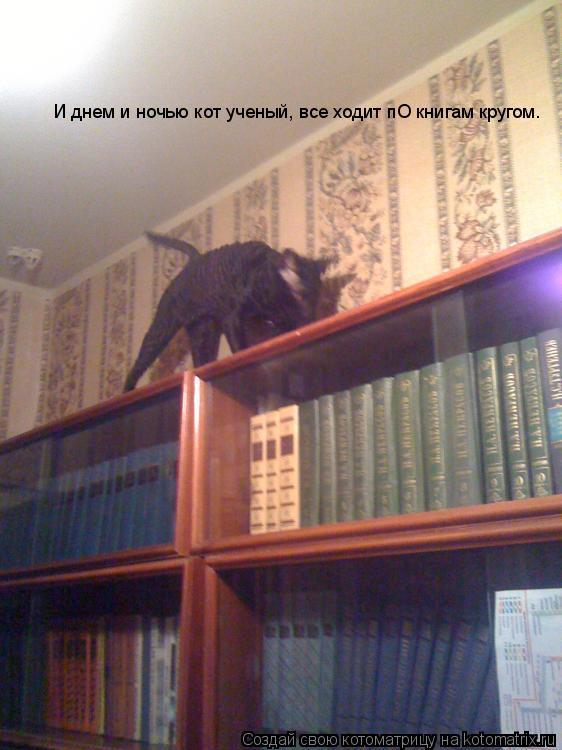 Котоматрица: И днем и ночью кот ученый, все ходит пО книгам кругом.