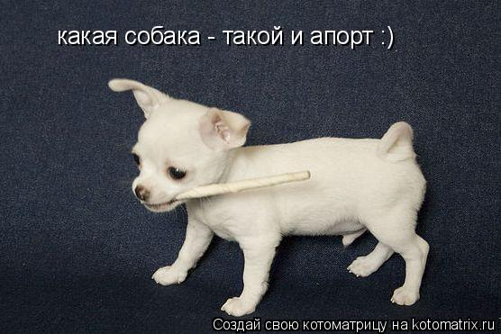 Котоматрица: какая собака - такой и апорт :)