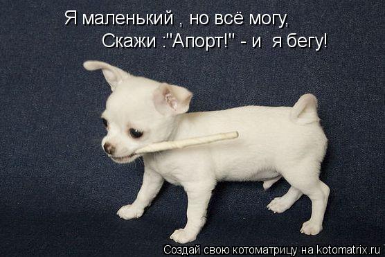 """Котоматрица: Я маленький , но всё могу, Скажи :""""Апорт!"""" - и  я бегу!"""