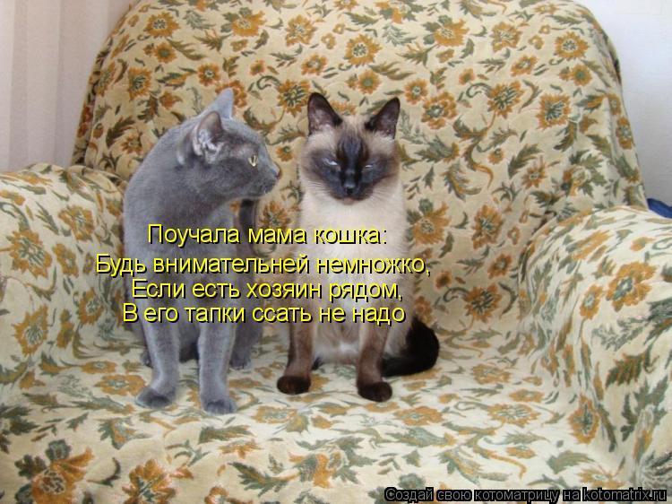 Котоматрица: Будь внимательней немножко, Если есть хозяин рядом, В его тапки ссать не надо Поучала мама кошка: