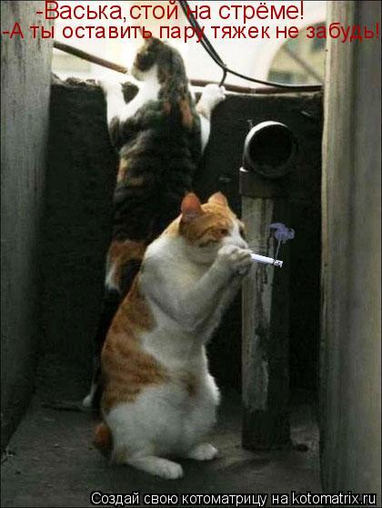 Котоматрица: -Васька,стой на стрёме! -А ты оставить пару тяжек не забудь!