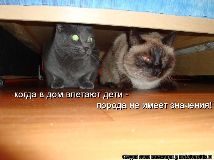 Котоматрица: когда в дом влетают дети -  порода не имеет значения!
