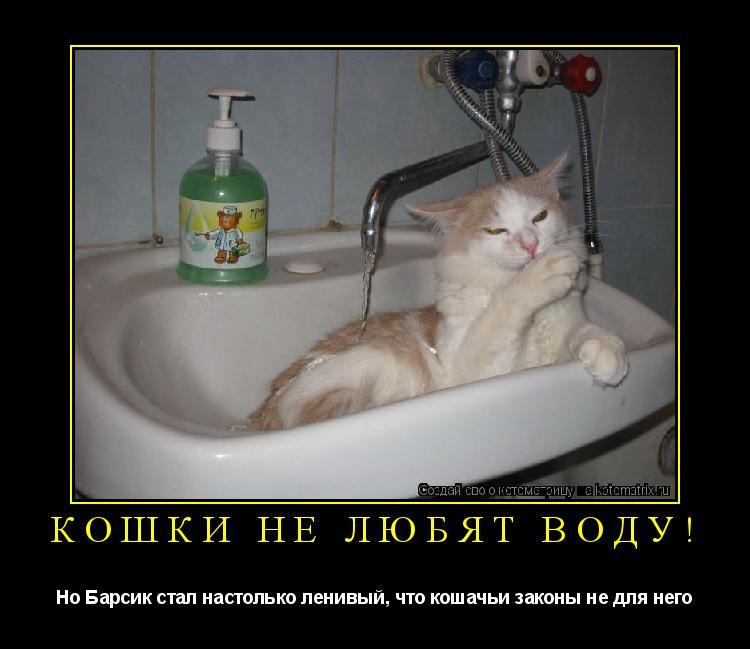 Котоматрица: Кошки не любят воду! Но Барсик стал настолько ленивый, что кошачьи законы не для него