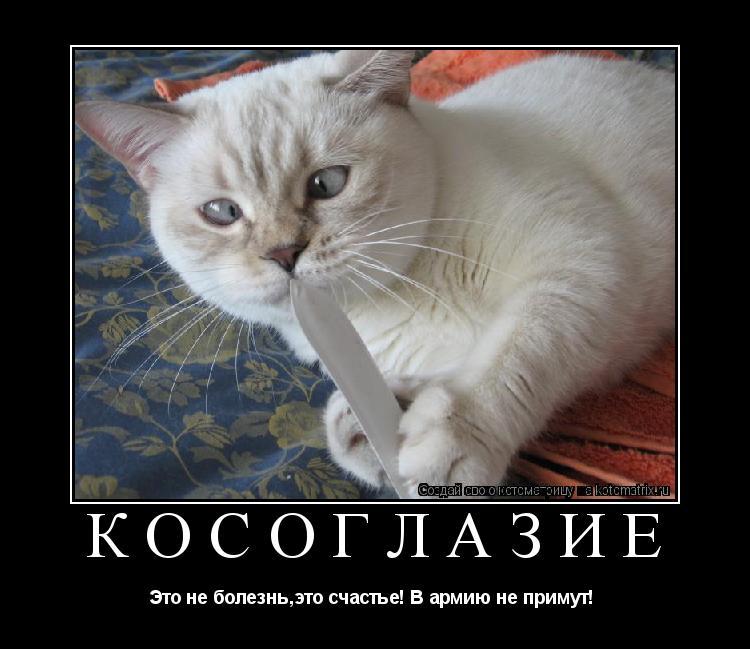 Котоматрица: Косоглазие Это не болезнь,это счастье! В армию не примут!