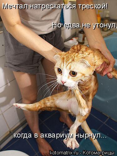 Котоматрица: Мечтал натрескаться треской!  Но едва не утонул,    когда в аквариум нырнул...