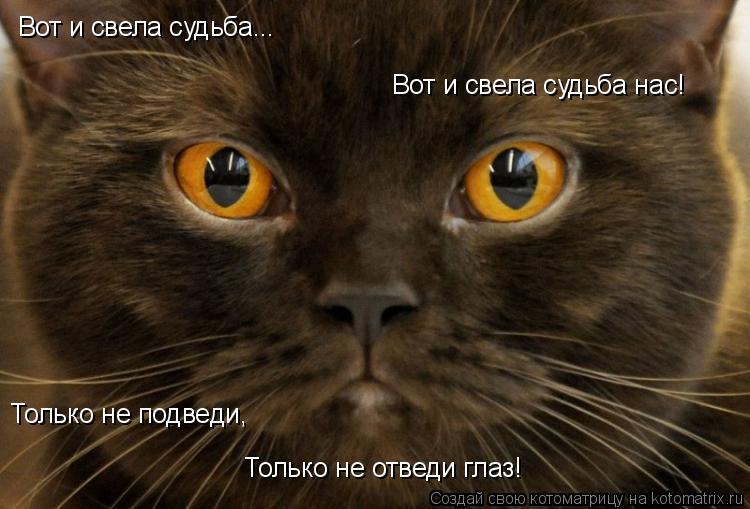 Котоматрица: Вот и свела судьба нас! Только не отведи глаз!   Только не подведи, Вот и свела судьба...