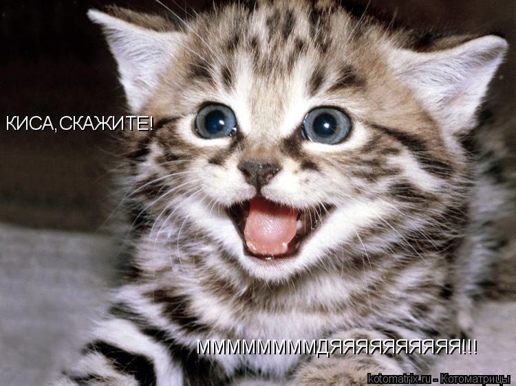Котоматрица: КИСА,СКАЖИТЕ! ММММММММДЯЯЯЯЯЯЯЯЯЯ!!!