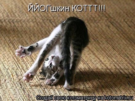 Котоматрица: ЙЙОГшкин КОТТТ!!!