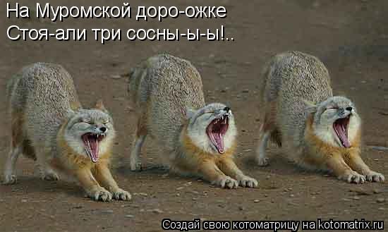 Котоматрица: На Муромской доро-ожке Стоя-али три сосны-ы-ы!..