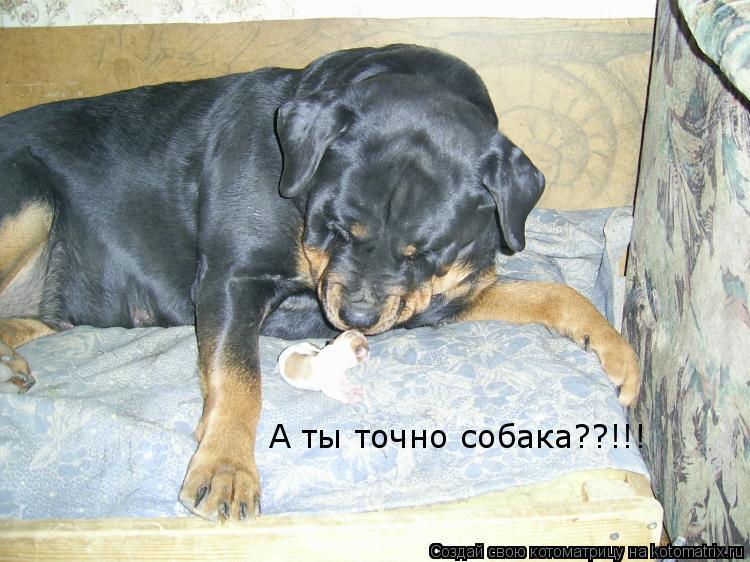 Котоматрица: А ты точно собака??!!!